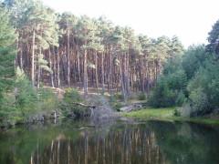 Río y pinar